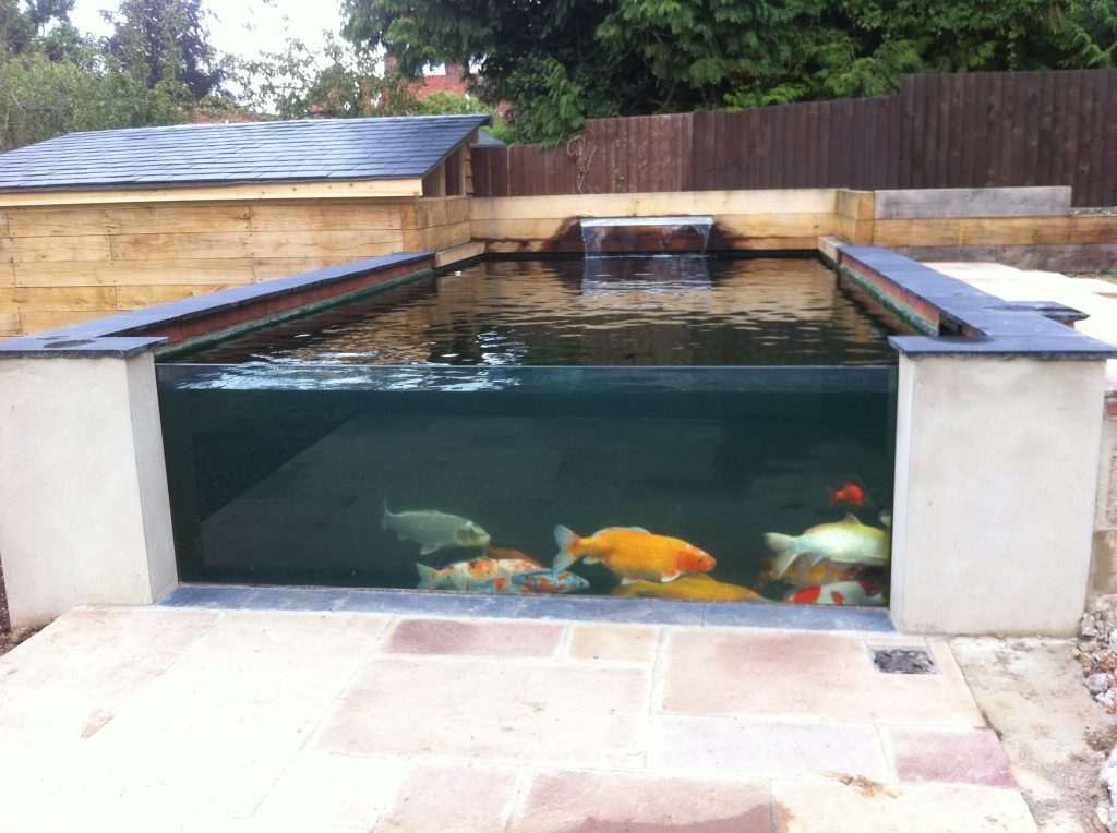 Koi pond white colne the pond specialist for Koi pond specialist